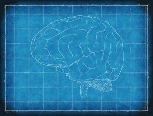 brain-